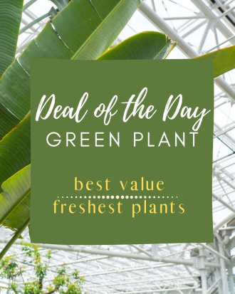 Green Plant Deal of the Day