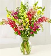 Vase of Snapdragons