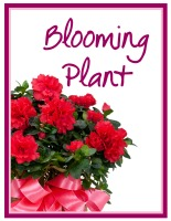 Blooming Plant