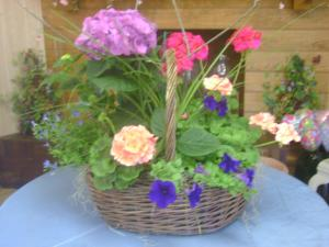 Blooming Plant Basket