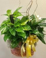 Small Combo Planter by TLS Florist