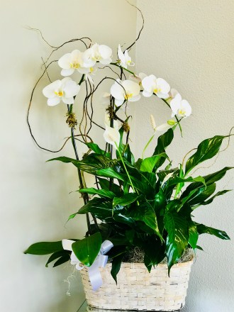 Small Combo Planter with Orchid by TLS Florist