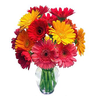 Gerberas Galore, daisies, new baby, housewarming, congratulations, friendship, thank you, get well
