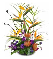 Mahalo Birds of Paradise, Orchids, Protea, year round