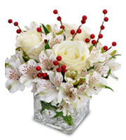 Frosted Berries Christmas roses alstroemeria