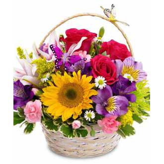 Butterfly Basket sunflowers, roses, daisies, year round, plants