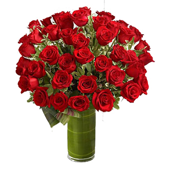 Romantic Roses, roses, top of the line