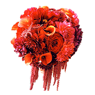 Red Blaze Clutch, amaranthus, roses, callas, chrysanthemums, bridal bouquet