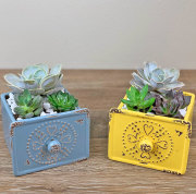 Set of 2 Drawer Succulent Planter