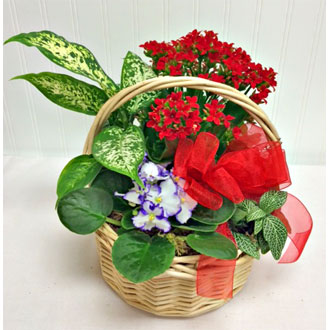 Blooming Basket Garden