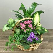 Bountiful Plant Basket