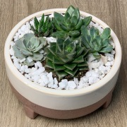 Seattle Succulent Planter