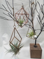 GeoMetric Air Plant Set