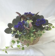 Hummingbird Violet Basket