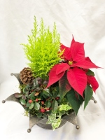Christmas Royal Planter