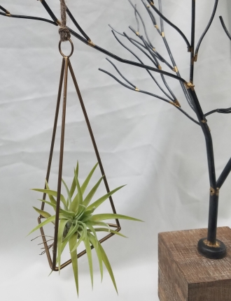 Triangle Air Plant
