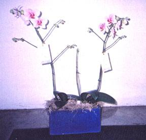 Large Selection of Exotic Orchids