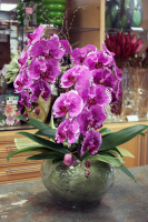 Cascading Orchid Planter