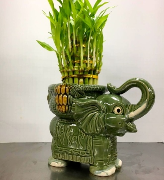 Lucky Bamboo Elephant Planter