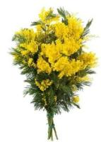 Mimosa bouquet