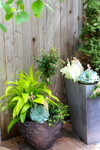 Cool Shade Summer Planter