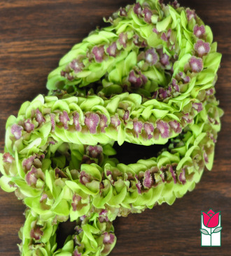 Green Pikky Orchid Lei