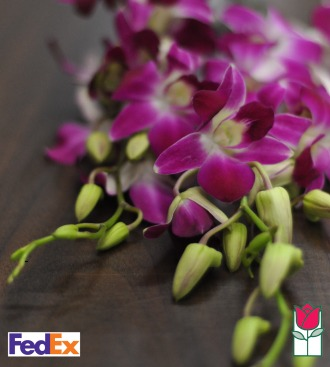 6 Dendrobium Orchid Spray Mix - [ship to mainland]