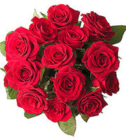12 Red Roses without filler