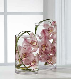 The FTD® Tranquil™ Orchid Arrangement