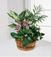 Send Blooming and green plants for same day delivery in Grand Rapids, Holland, Walker and Byron Center with Sunnyslope Floral, your local delivery florist