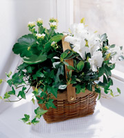 Blooming and green plants available for same day delivery to the home, funeral home or business in Grand Rapids or nation wide with Sunnyslope Floral