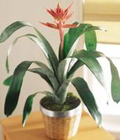 The FTD® Bromeliad