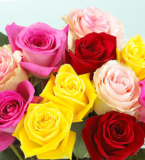 1 Dozen Mixed Color Medium Stem Roses - Wrapped