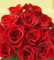 1 Dozen Red Medium Stem Roses - Wrapped