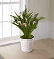The FTD® Calla Lily Planter
