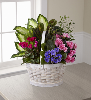 The FTD® Peaceful Garden™ Planter