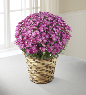 The FTD® Devotion™ Pink Mum