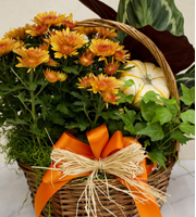 Harvest Garden Basket Medium