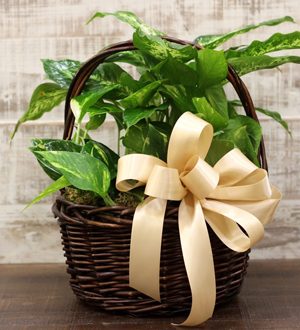 Foliage Basket Small
