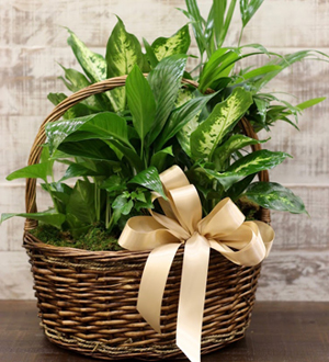 Foliage Basket Medium