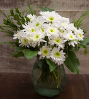 White Pom Daisy Medium