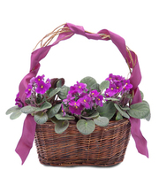 Very Violet Basket