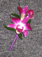 Poetry Orchid
