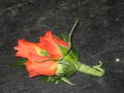 Orange Spray Rose Boutonniere