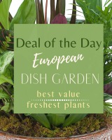 Deal of the Day - European Dish Garden