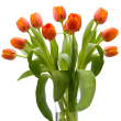 The Tulip Bouquet - Orange