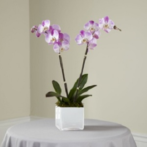 The Purple Orchid Planter