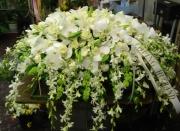 Orchid Casket Cover 4ACC