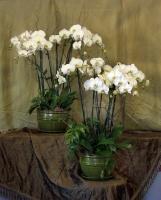 Orchid Planter 4BOP