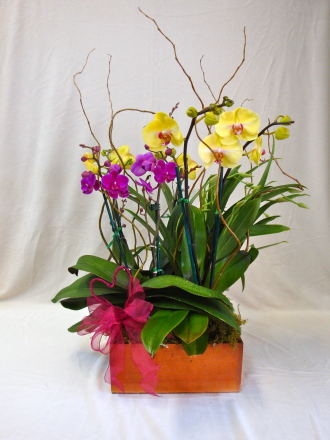 Orchids In Love